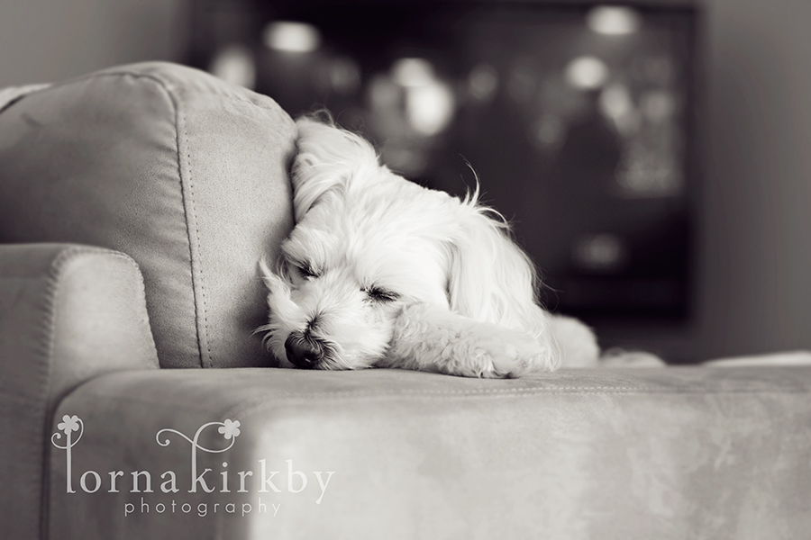 Child photography, the family dog Cooper